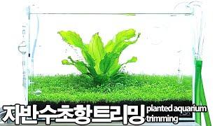 자반 수초어항 전경수초  트리밍 - 45cm plant…