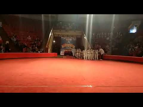 Танцы долматинцев