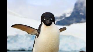 オニかわいいペンギン大集合!面白い!ペンギンの赤ちゃんがかわいい~...