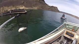 banks lake whitefish .  fishing from the boat сиг с лодки клёв хороший .