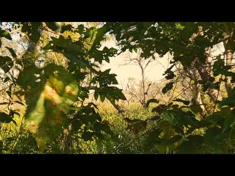 Buenos Aires - Nature Jungle Underground Hyperlapse @ Tigre-Delta La Plata