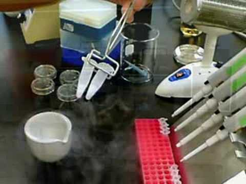 Inserting GFP Into Bacteria
