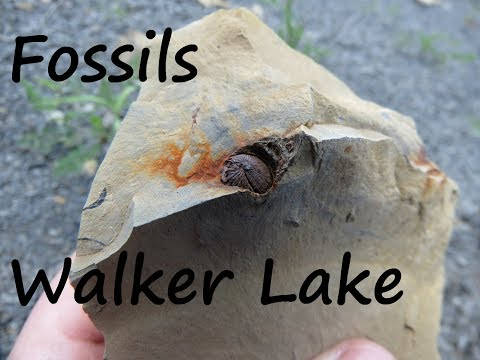 Fossil Hunting at Walker Lake, Snyder County PA