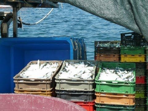 Die blaue Perle der Adria - der Fischerhafen von Rovinj - The blue pearl of the Adria