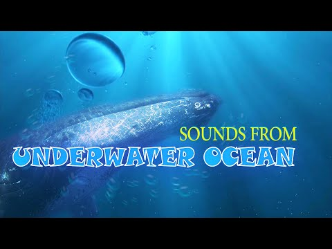 Ambiental Planet | Sounds From Underwater Ocean - Whale, Orca, Bubbles