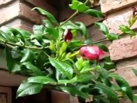 arbusto en flor