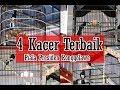 Piala Presiden Ronggolawe Asabil Phk Dragon Ball Jatayu Jr  Kacer Terbaik Bertarung Sengit  Mp3 - Mp4 Download