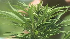 Whitefield, Maine, pick-your-own hemp farm dropped by bank, insurance company