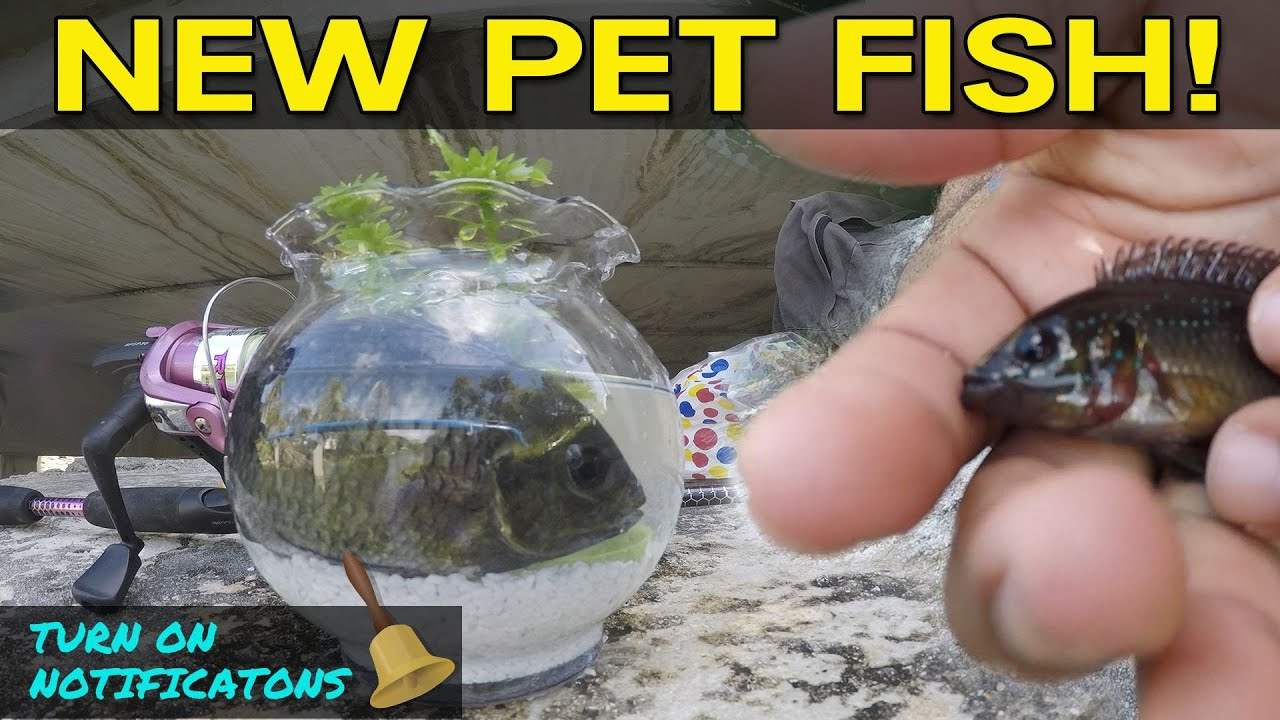 Catching pet exotic fish for aquarium monster mike download for Where can i buy fish near me