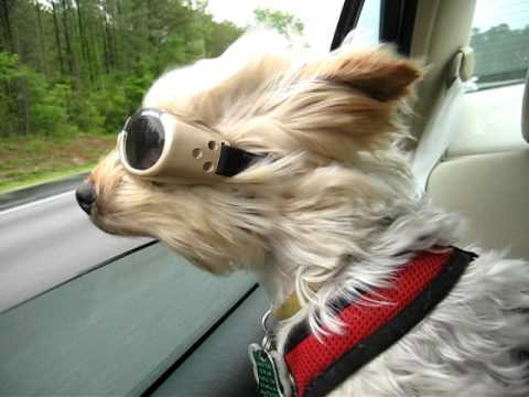 Leo And His Doggles Youtube