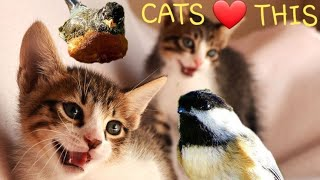 Videos For Cats !! Mini 30 Minute SPRING BIRDS thumbnail