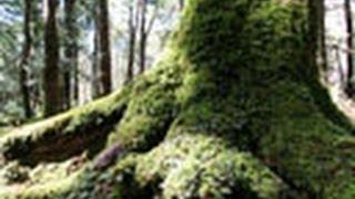 見つめてみよう!植物の世界 (24)シダとコケ