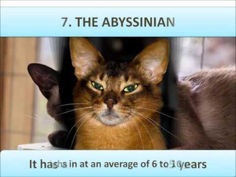 Top 10 Cat Breeds!