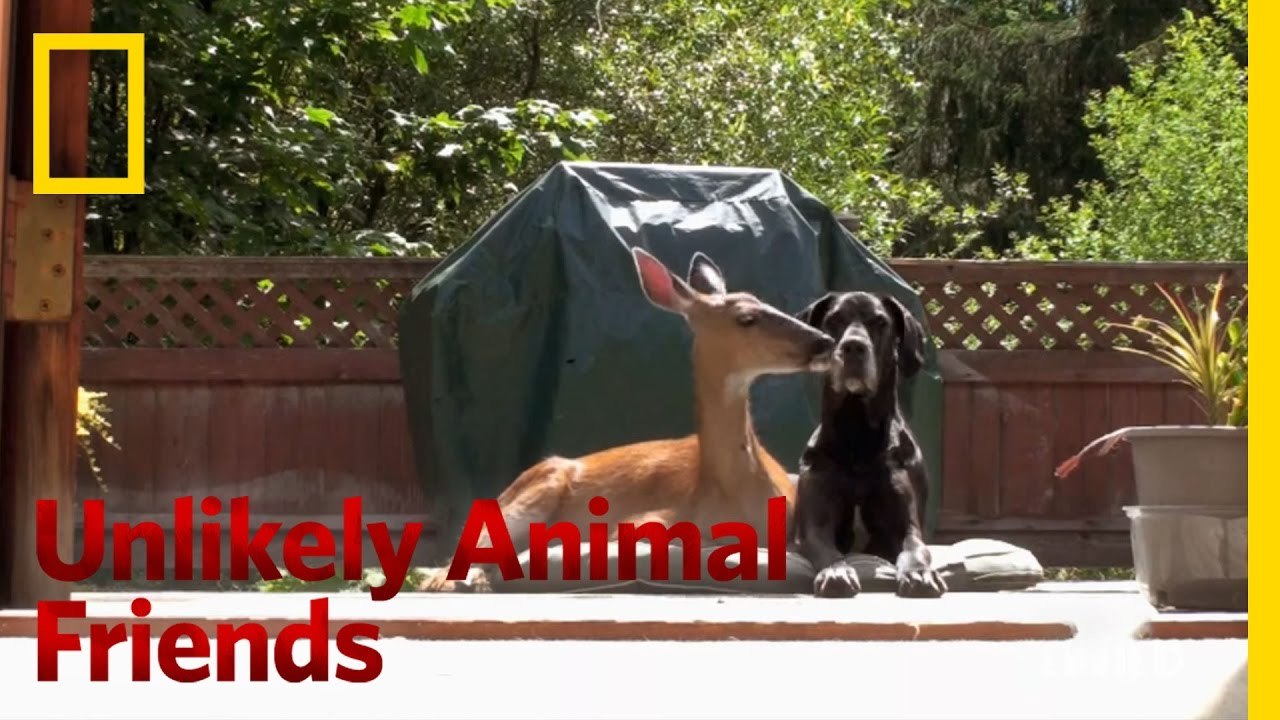 Official Preview Unlikely Animal Friends YouTube - 15 unlikely animal friendships will melt heart