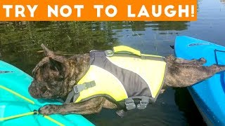Try Not To Laugh Funniest Animal Compilation September  2018 | Funny Pet Videos