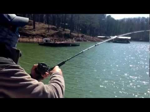 44lb Monster Striped Bass Caught With Gizzard  Shad On Lake Lanier