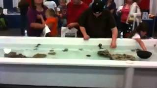 Touch Tank   Americas Family Pet Expo Seattle