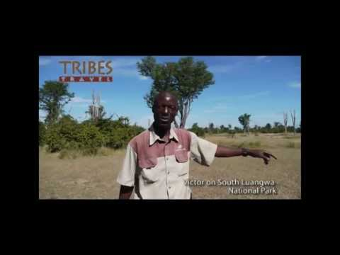 Tribes Travel: Professional guide, Victor, on South Luangwa National Park