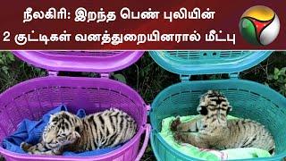 நீலகிரி: இறந்த பெண் புலியின் 2 குட்டிகள் வனத்துறையினரால் மீட்பு | Tiger