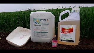 Підкормка та інсектецидна обробка пшениці по листку. Агро-канал