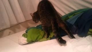 Лилу и великий ум кошек