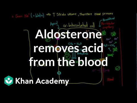 Aldosterone Removes Acid From The Blood   Renal System Physiology   NCLEX-RN   Khan Academy