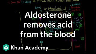 Aldosterone removes acid from the blood