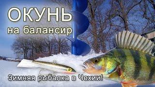 ПОПАЛ НА РАЗДАЧУ ОКУНЯ Ловля окуня зимой на балансир Зимняя рыбалка в Чехии