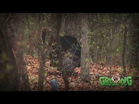 Food Plot Tips And Turkey Hunting: One Last Strutter For A Big Finish! (#182) @GrowingDeer.tv