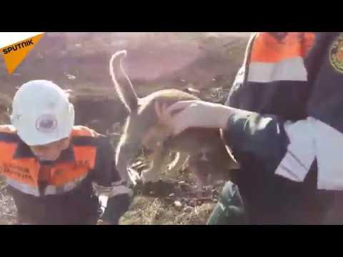 Kazakhstan: Emergency Services Rescue Cat Stuck in Concrete Slab