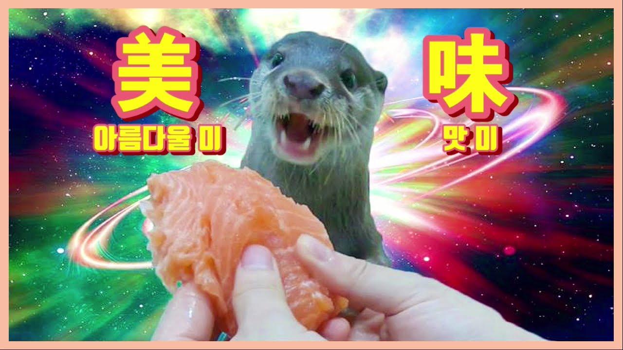 수달에게 생연어를 통째로 선물했어요! | 왕크니까 왕맛있다! 통연어에 세상 행복한 수달 돌체라떼