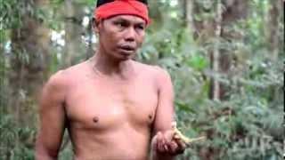 SUMATRA 2013 - Trek po pralese 3. část