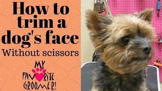 How to trim a dog's face without scissors