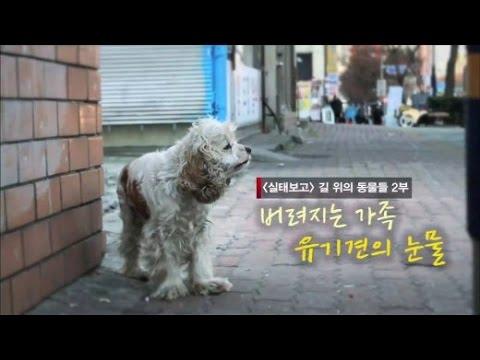 [부산KBS] 시선360 '버려지는 가족, 유기견의 눈물'  방송본