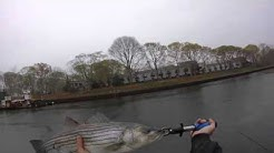 Striped Bass Point Pleasant Canal 4/28/16