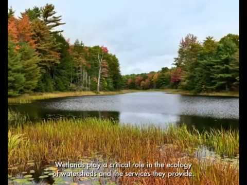 Wetlands in the Forest on YouTube