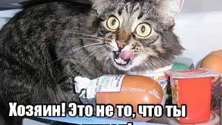 Мемы с животными! Часть 2