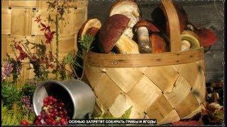 Осенью запретят собирать грибы и ягоды №675