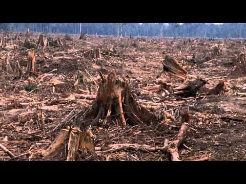 Tyler O Indonesia Deforestation
