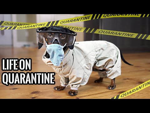 Ep#1: QUARANTINE LIFE  Funny Wiener Dogs Staying Home!