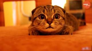Пушистое утро: кошки лечат