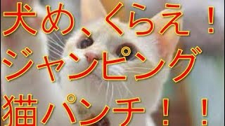 Twitterで話題の面白動物動画![ジャンピング猫パンチ][犬VS猫] [腹筋崩...