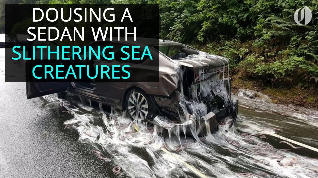 truck-full-of-eels-overturns-in-oregon-sliming-sedan
