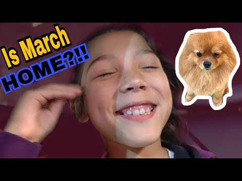 Do we FINALLY bring our puppy March pom home?!! | Familia Diamond