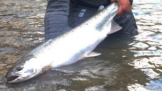 Late Winter Steelhead Fishing In The SNOW! | Addicted Life Ep. #31 thumbnail