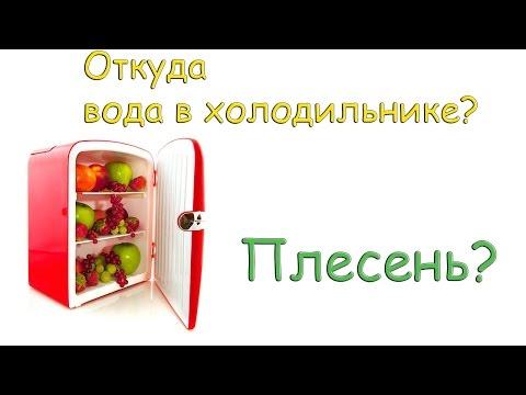 Чистка и дезинфекция своими силами - избавляемся от плесени в холодильнике