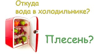 63 почему в холодильнике вода и плесень - where is accumulates water and mold in fridge?(, 2016-04-13T11:08:08.000Z)