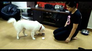 Fun Dog Training Tricks With Varuna Kaur