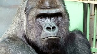 "Moscow Zoo part ""monkeys"" (Московский зоопарк часть ""обезьяны"".)"