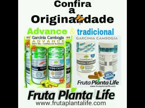 Fruta Planta Life Garcinia Cambogia Youtube